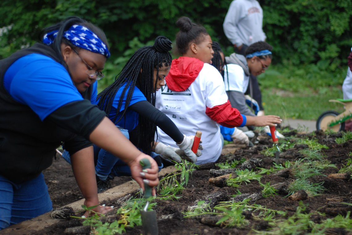 Teens plant young green plants in a garden bed