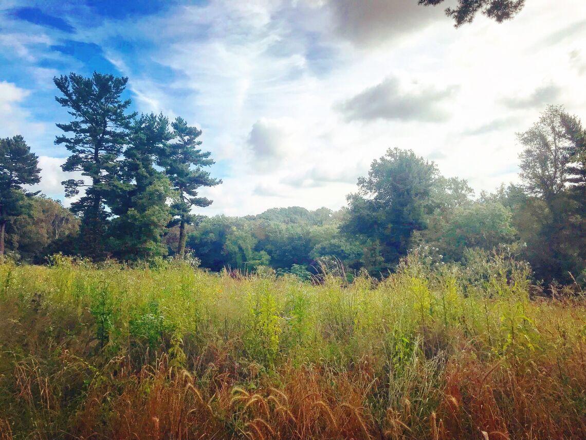 Mount Pleasant Meadow