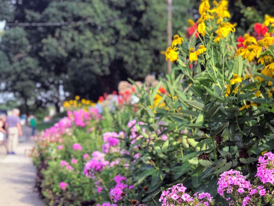 gorgas park flowers